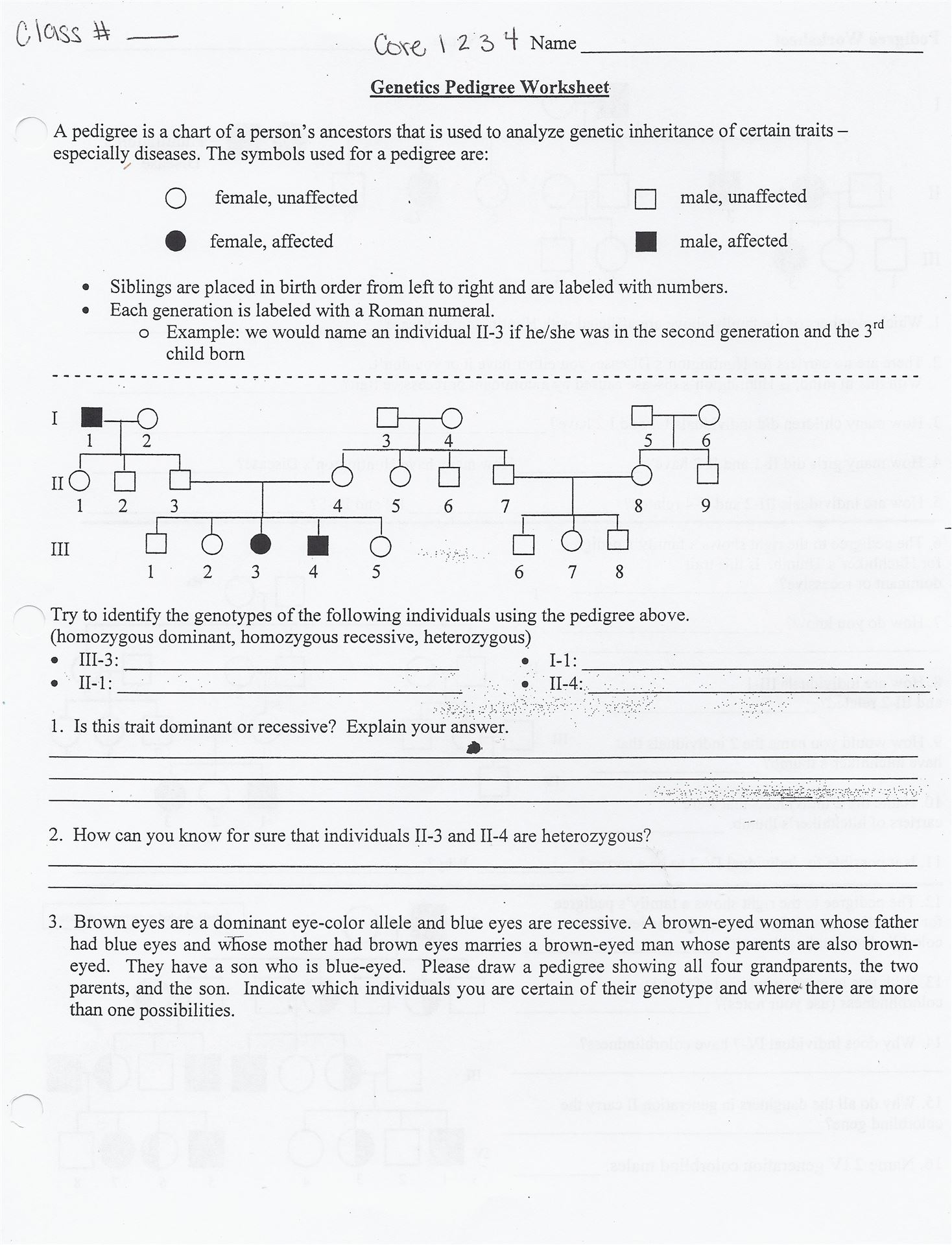 Pedigree worksheet answer key